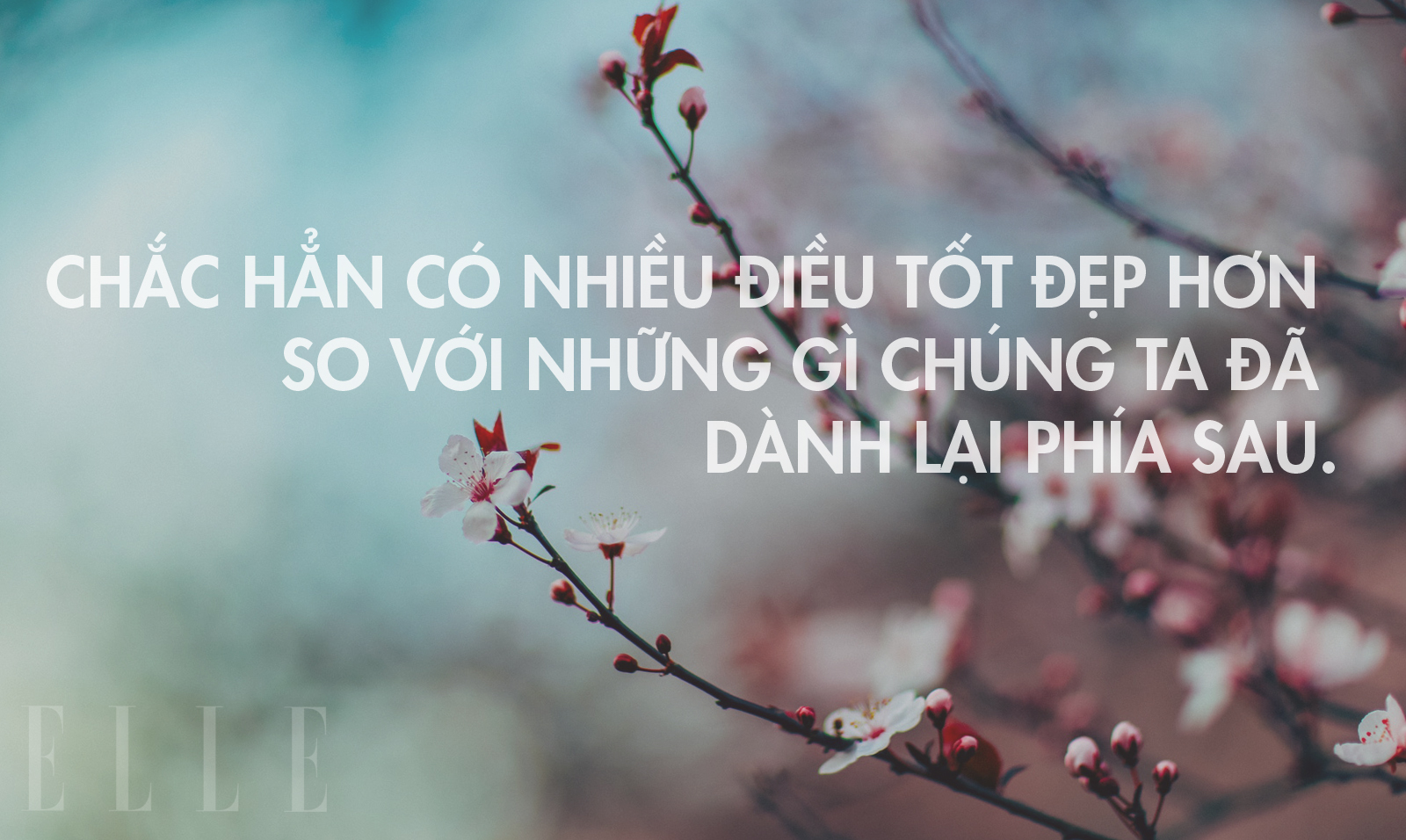 nhung-cau-noi-hay-de-dang-anh-len-facebook-6